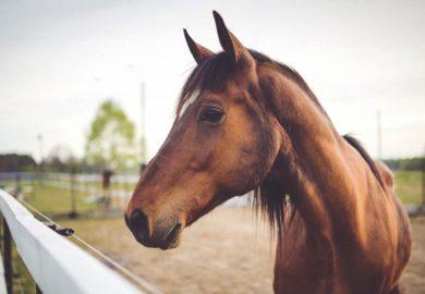 L'homéopathie dans l'art vétérinaire